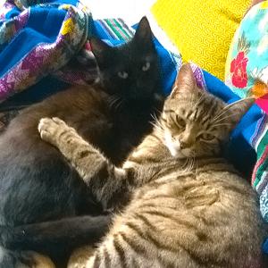 chats elise et camille